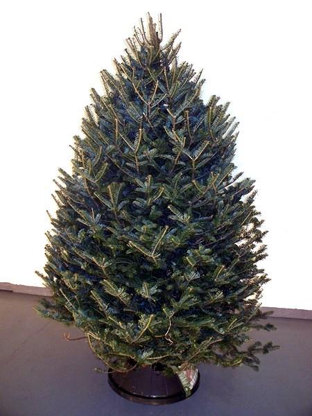 balsam fir bc douglas fir wholesale christmas trees alberta - Wholesale Christmas Trees